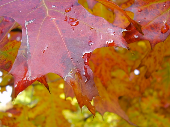 7 tips clearing leaves property management guide